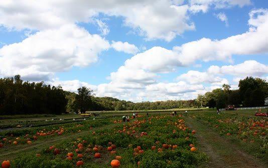 Stuckmeyers Pumpkin Patch